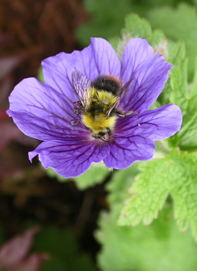 Garden Clearance Sheffield