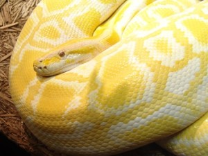 python-house-clearance-spring-clean
